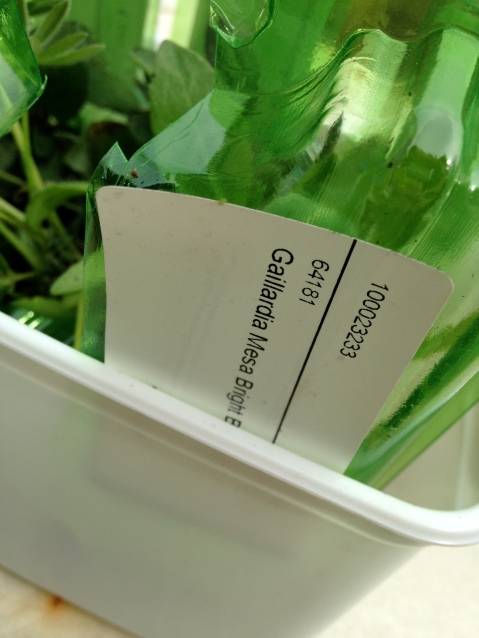 Plant Me Now label detail, as seen on Stylist's Own Blog by Joanna Thornhill
