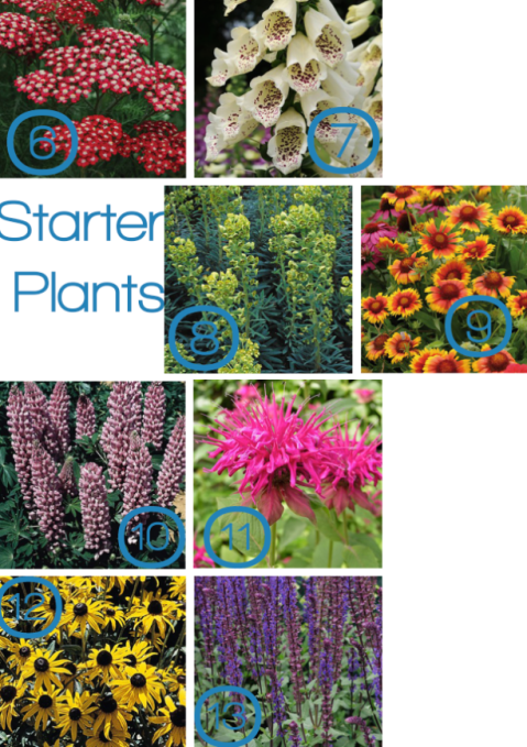 Starter plants from Plant Me Now, as seen on Stylist's Own Blog by Joanna Thornhill