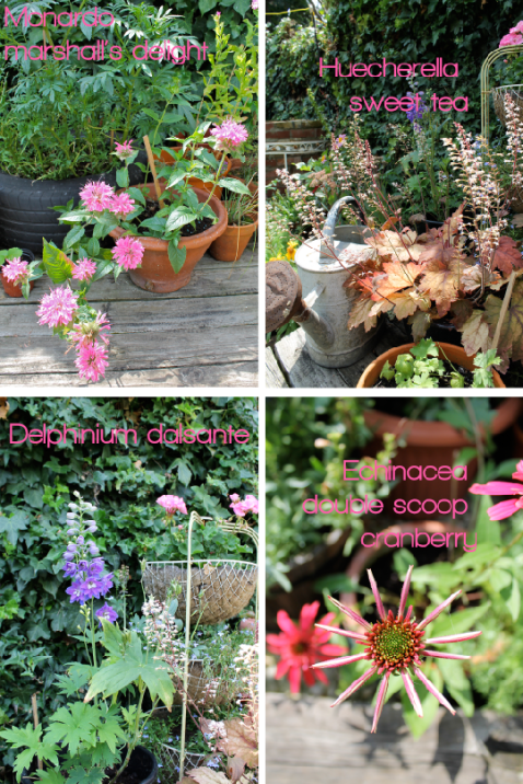 Garden Makeover New Plants by Joanna Thornhill for Stylist's Own pic one